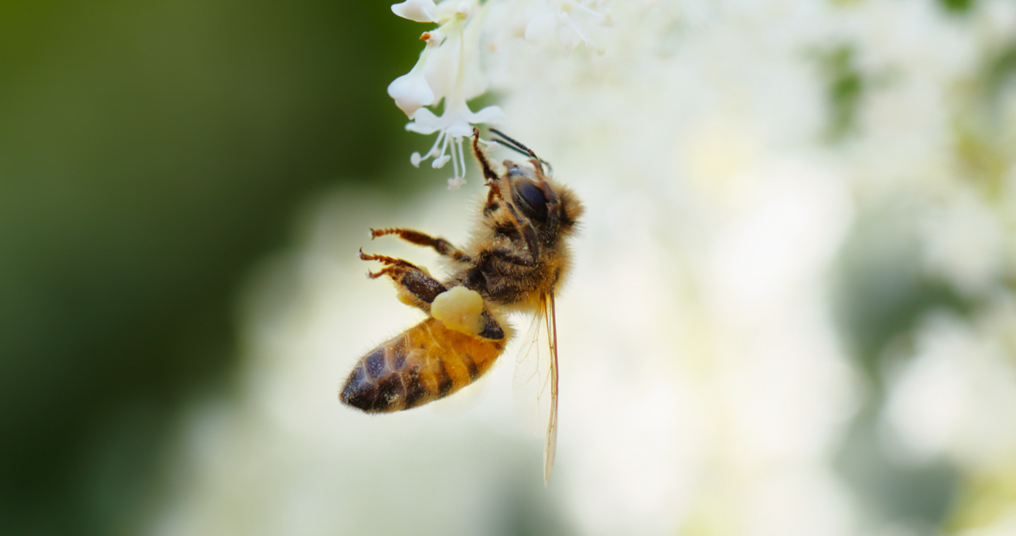 A close-up of a bee and a flower.