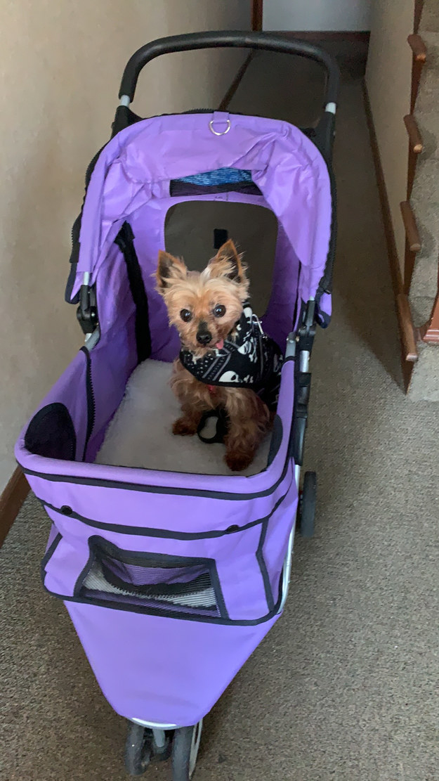 Reviewer photo of their dog in a stroller