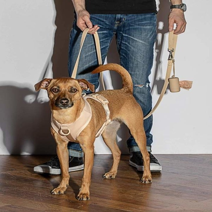 A model holding a dog on a leash with the poop bag holder attached to the leash