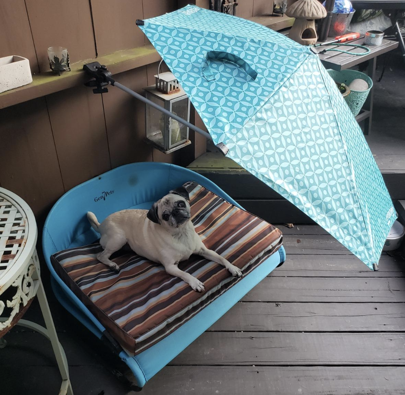 reviewer photo of pug in shade under a blue umbrella
