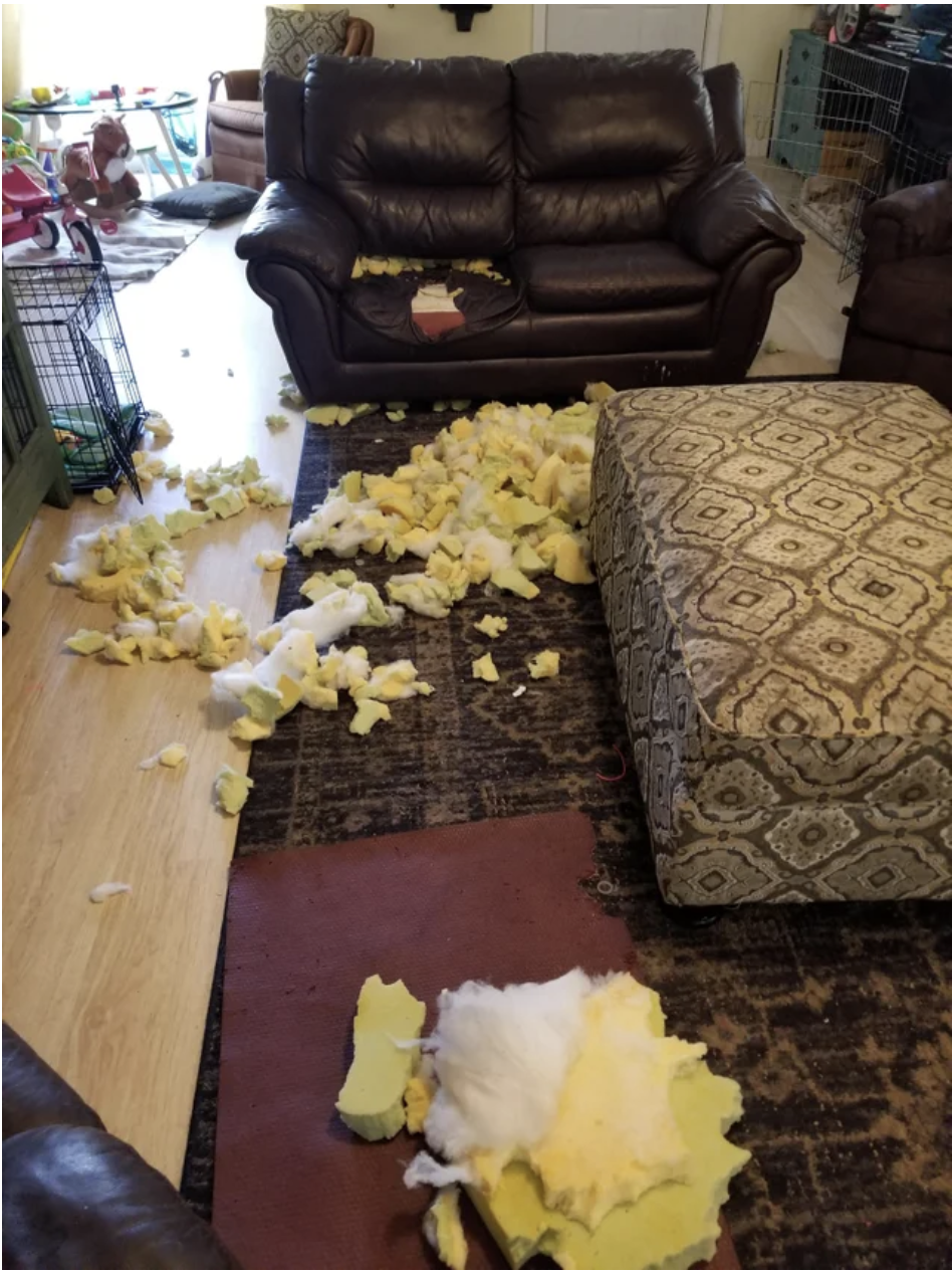 A destroyed couch in a family room