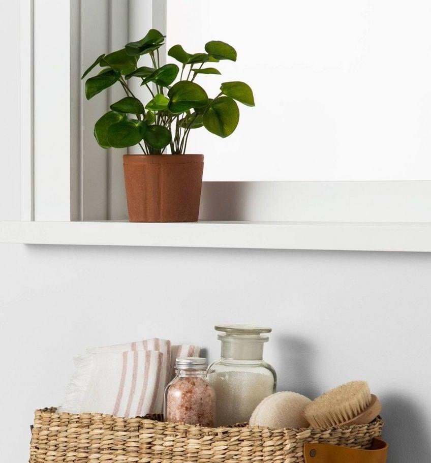 A leafy green plant in a ceramic pot