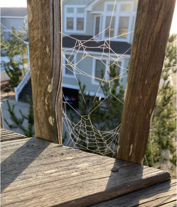 A spider web that looks amazingly like Spider-Man's face