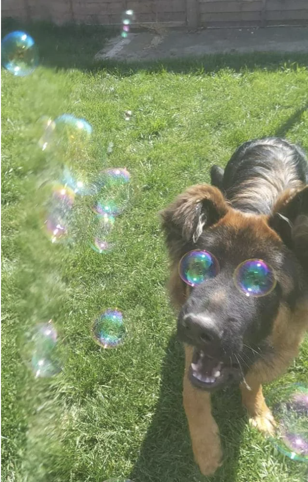 A photo where soap bubbles appear where a dog's eyes should be