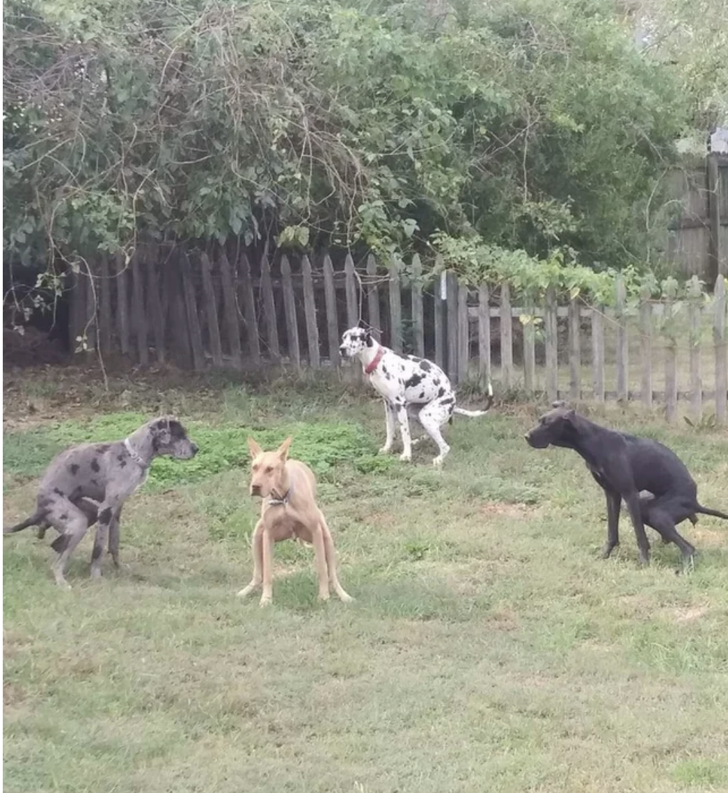 Four dogs go to the bathroom at the same time