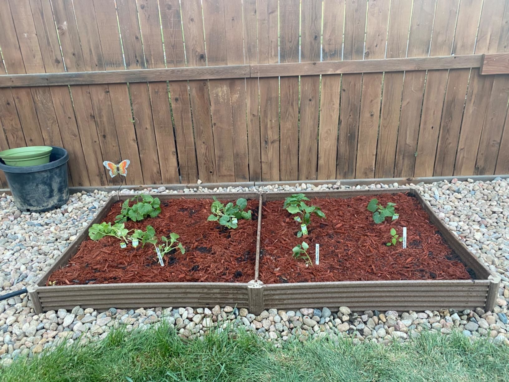 two brown square garden beds side by side full of seedlings and mulch