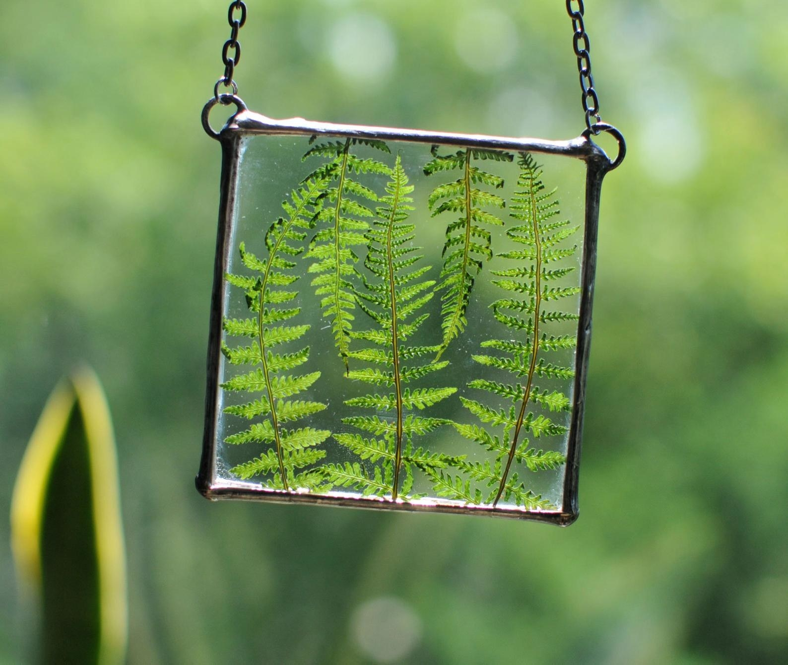 The hanging terrarium looks like a square piece of glass with a metal frame around it. There are three green fern leaves inside of it.