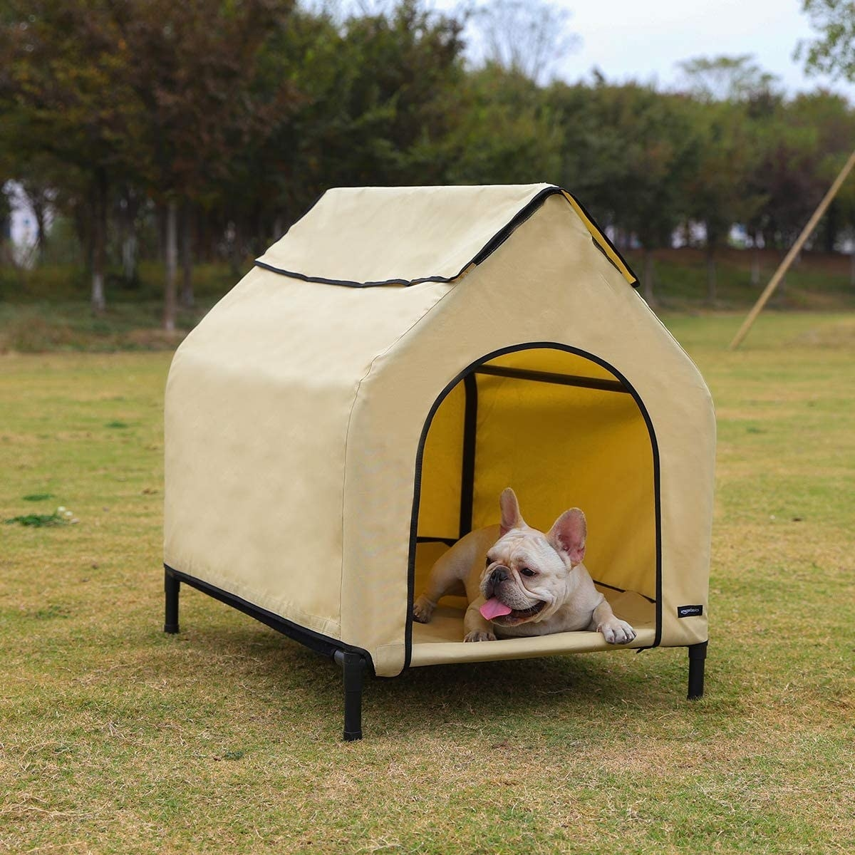 A lifestyle shot of the triangular, elevated dog bed with canvas covering and a French bulldog chilling out inside