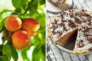 On the left, peaches growing on a tree, and on the right, a French silk pie with a slice taken out of it