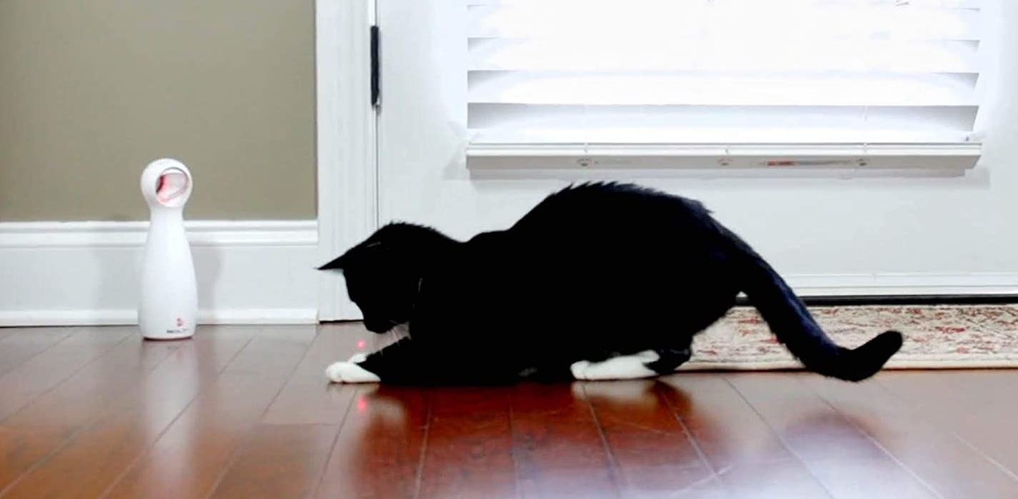 a small black cat chasing the laser from the white, standing laser pointer