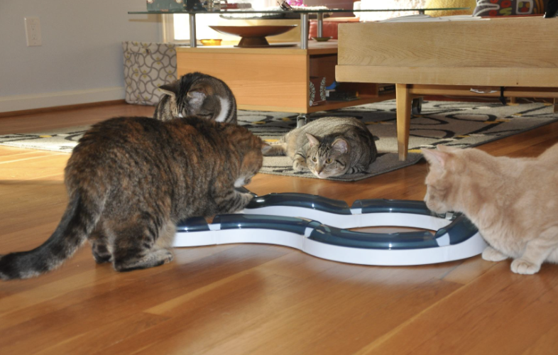 four cats playing with the balls that cycle through the circuit toy