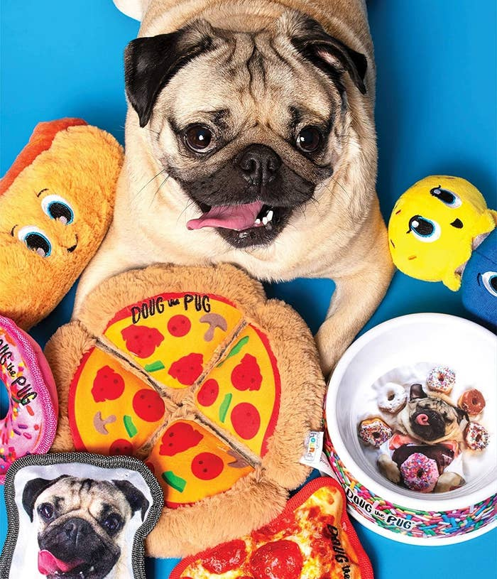 doug the pug sitting with the pizza-shaped dog toy in front of him
