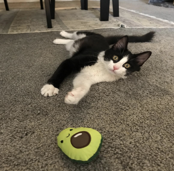 a cat laying on its stomach playing with the avocado toy