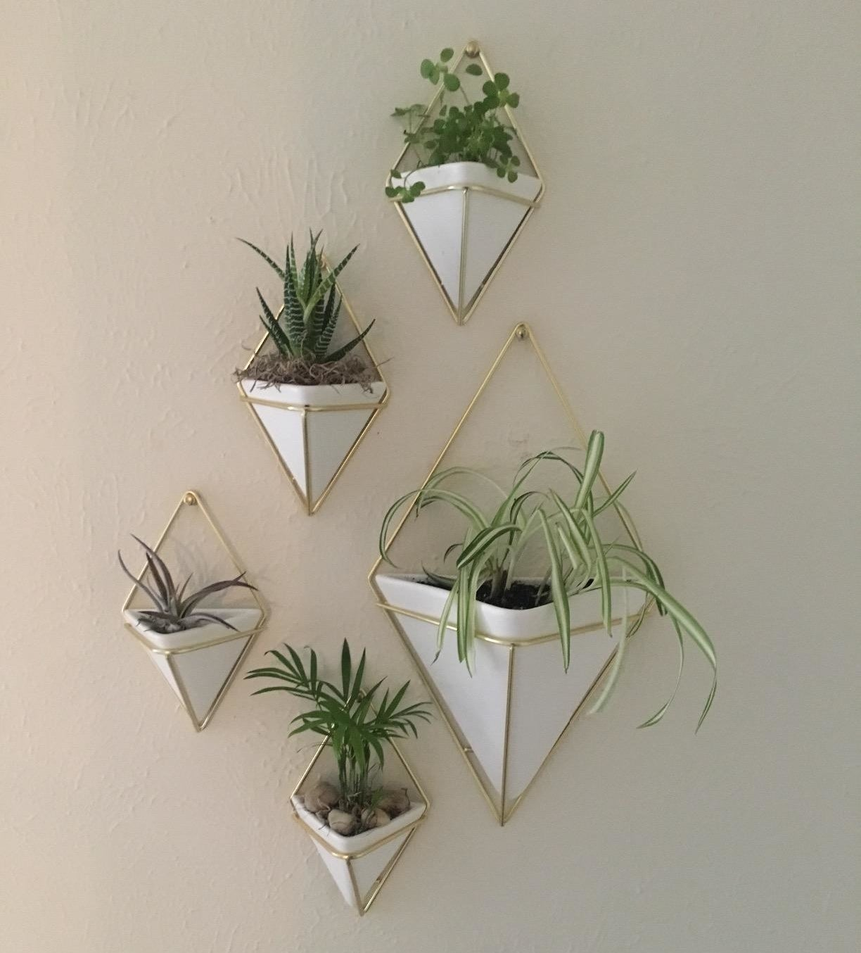 A reviewer's wall with five white and brass planters in various sizes