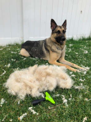 A reviewer's German shepherd sitting in front of this handheld raking brush and a massive lump of fur