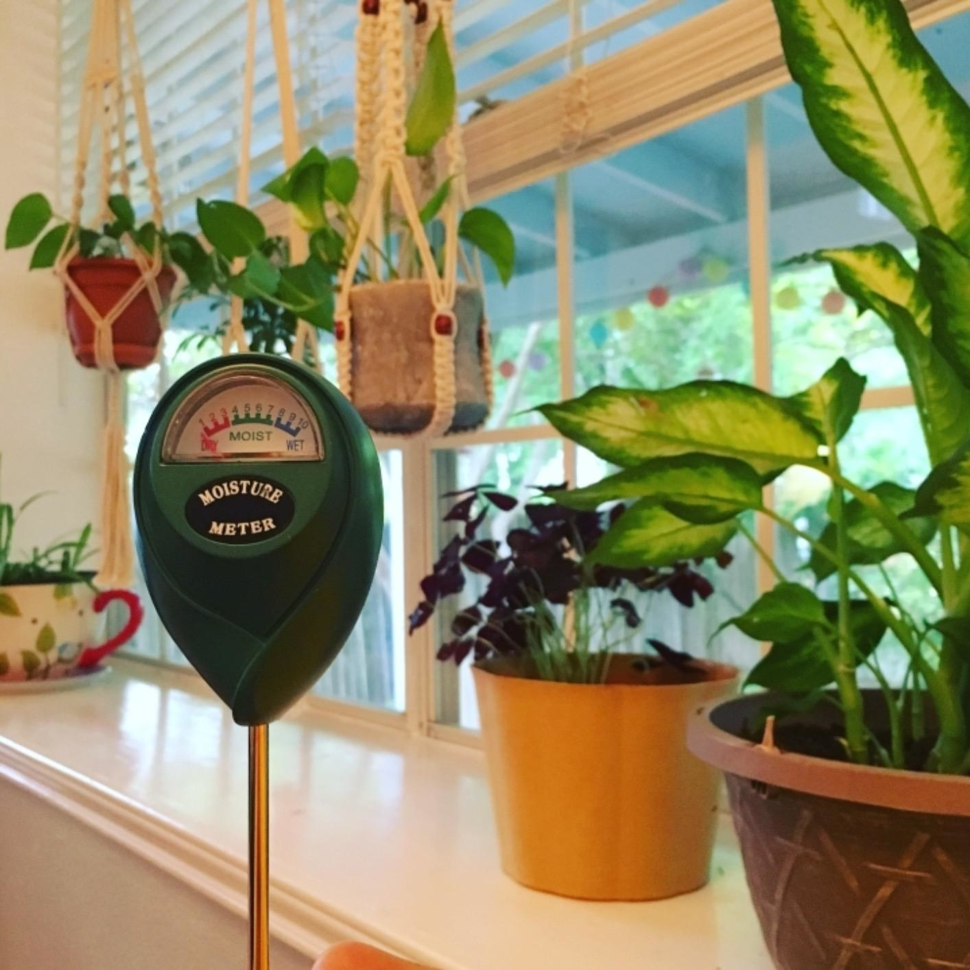 The moisture meter in front of a windowsill full of plants
