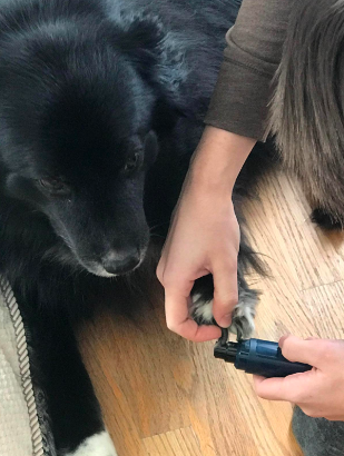 A reviewer trimming their dog's nails with the nail grinder