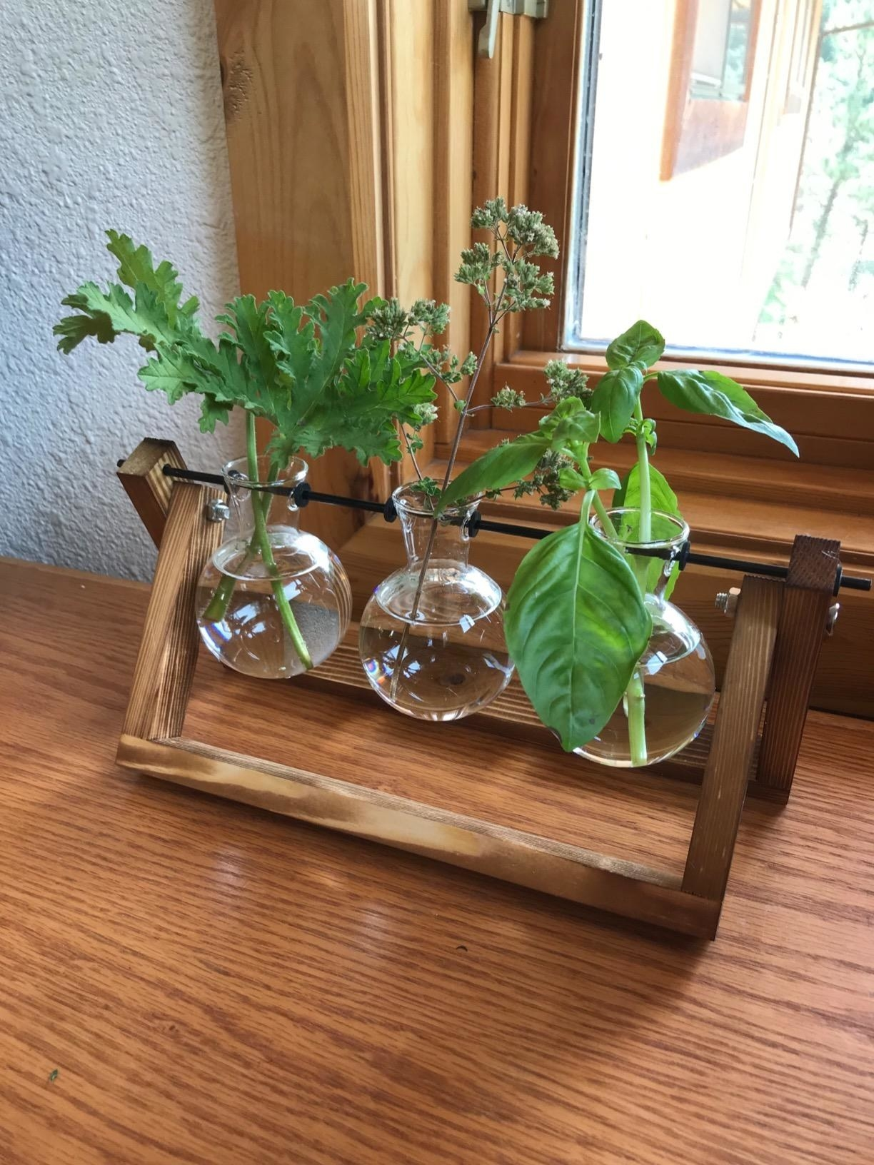 Reviewer propagating three clippings in the wood and glass station