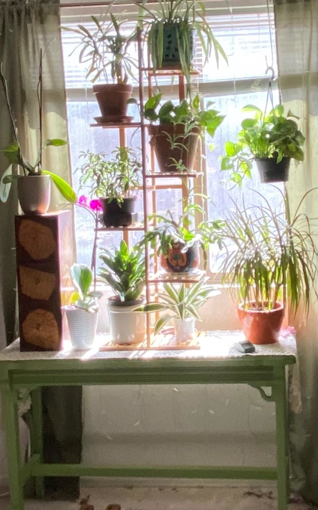 Review image of the plant stand on a windowsill