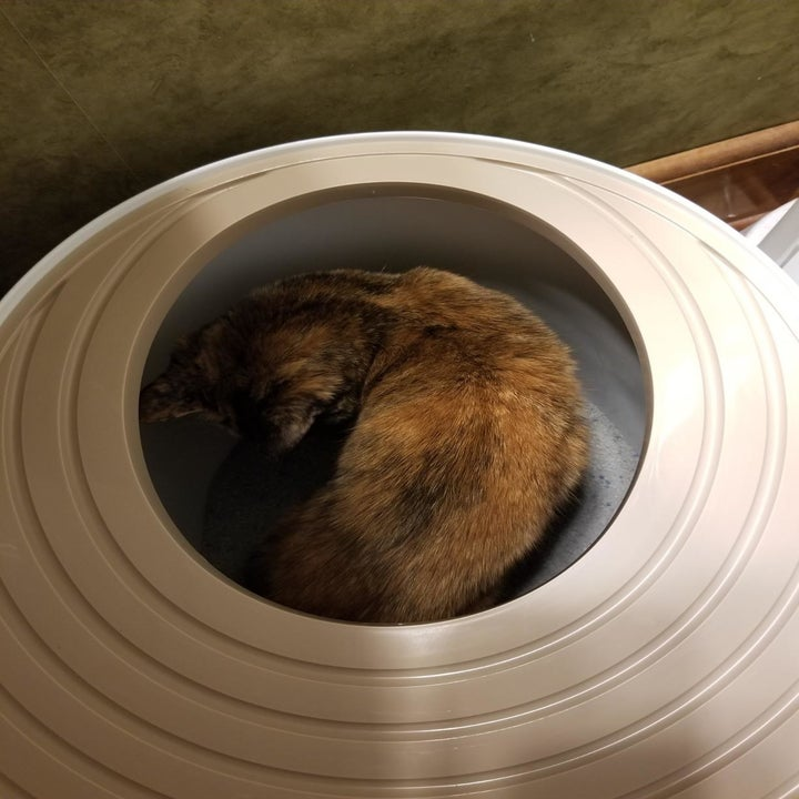 Reviewer photo of a cat inside the litter box showing how roomy the inside is