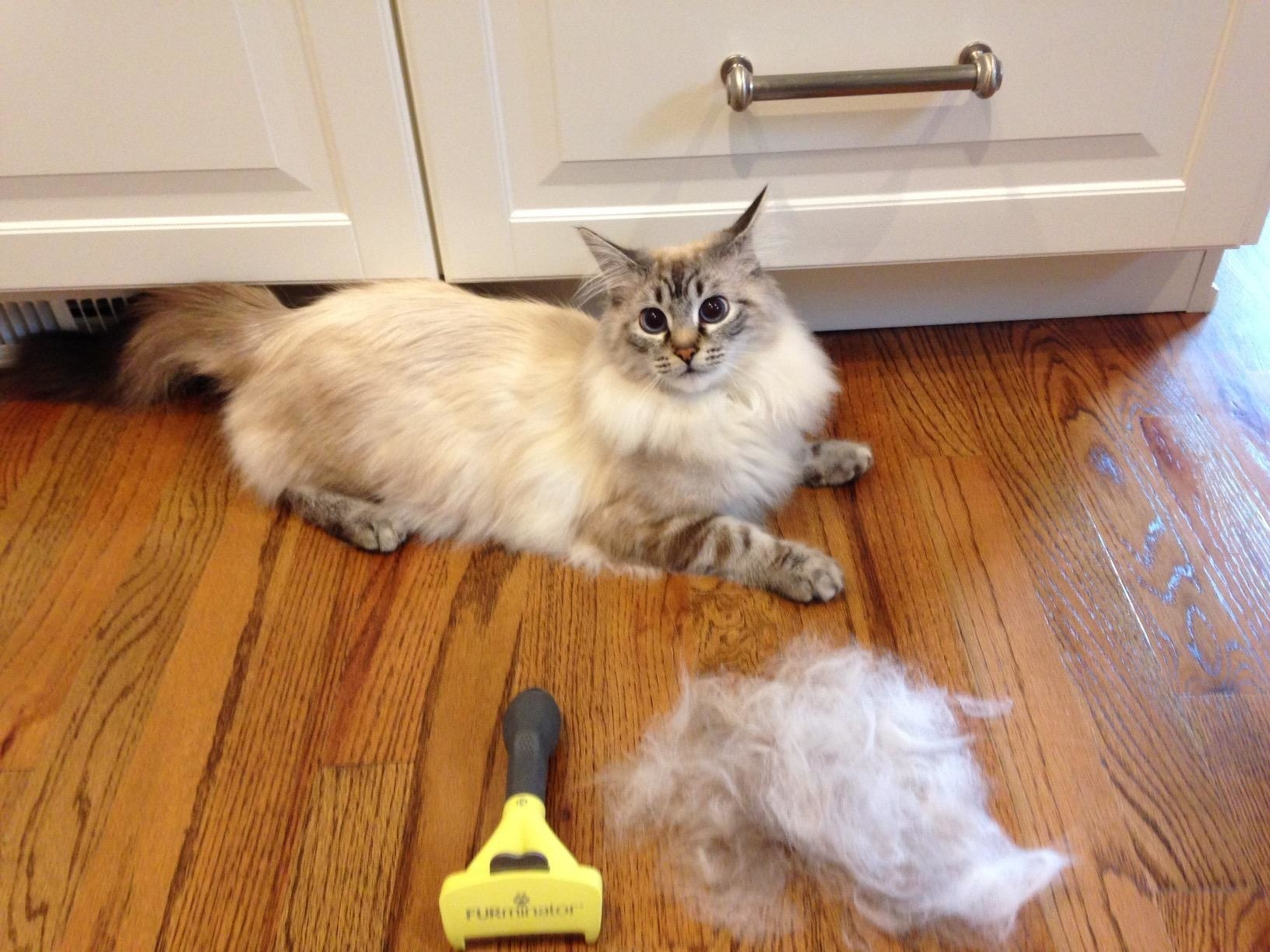 Reviewer photo of their fluffy, long-haired cat sitting by a large pile of fur that the brush removed