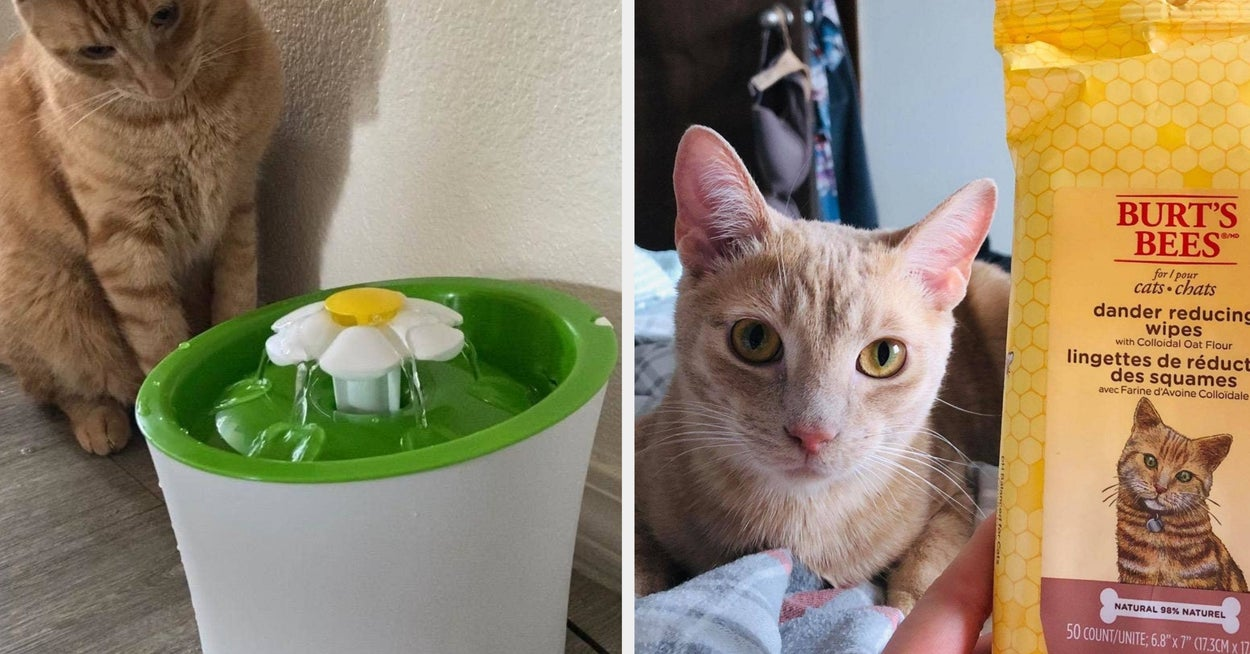 30 Problem-Solving Products For Cat Owners You Can Get On Amazon