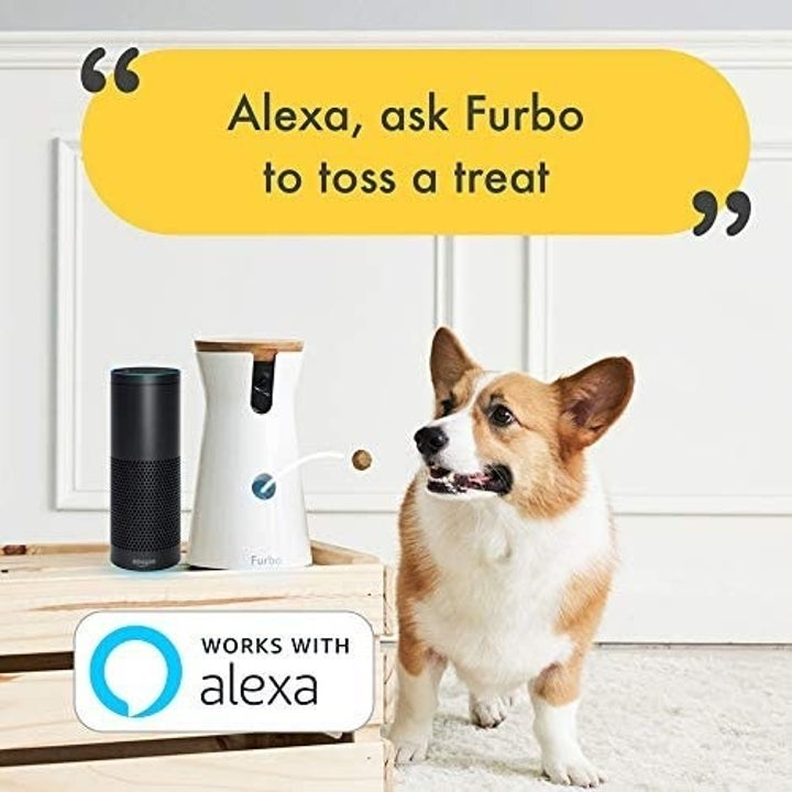 Infographic explaining that the Furbo works with Alexa