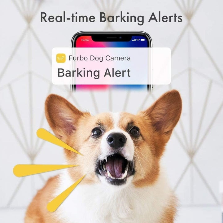 Infographic explaining Furbo's real-time barking alerts