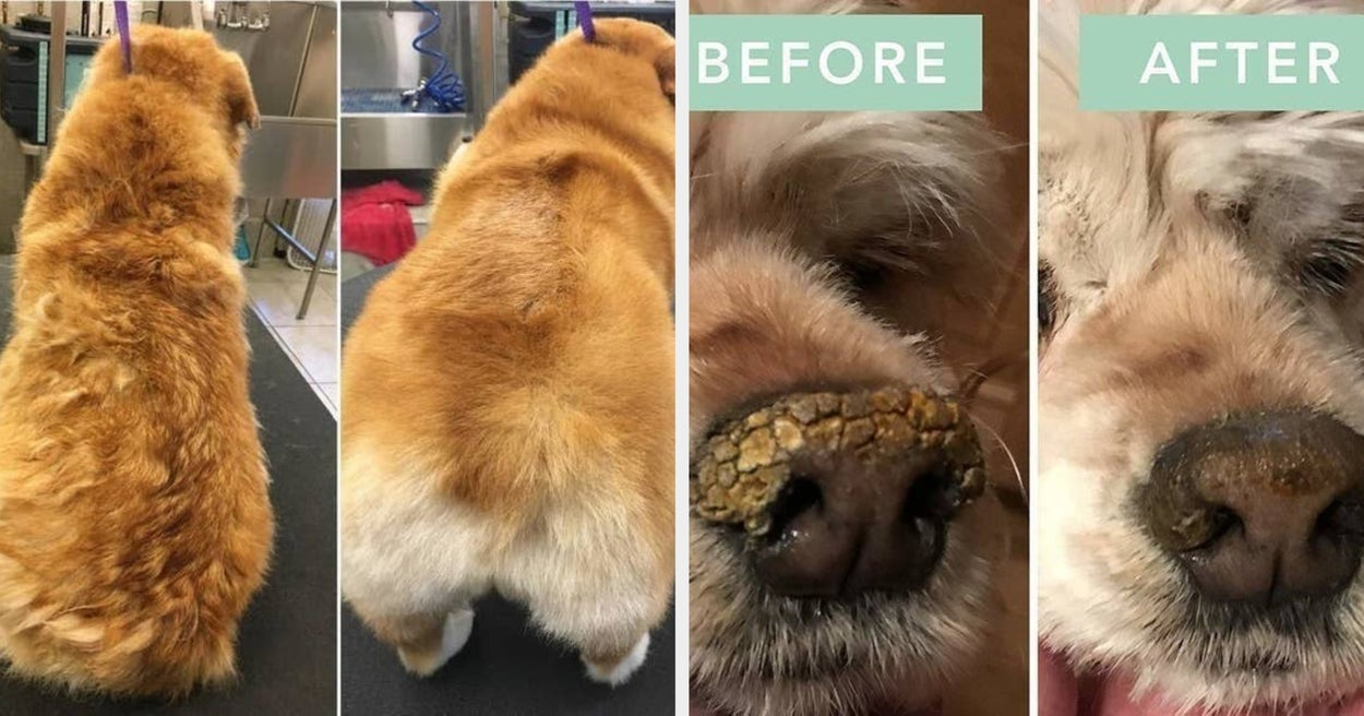 20 Products With Before-And-After Photos That Anyone With A Dog Should Probably See