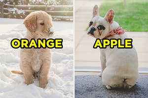 """On the left, a golden retriever puppy sits in the snow with snow on their nose and """"orange"""" typed on top, and on the right, a french bulldog puppy looks back at the camera and waits by the door and """"apple"""" is typed on top"""