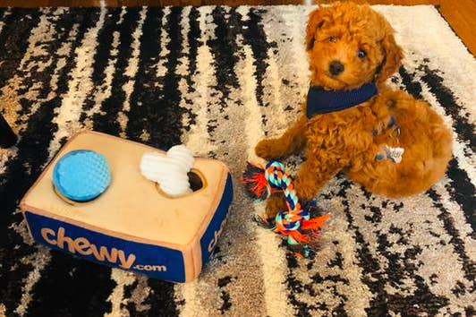 reviewer's goldendoodle puppy beside the set which has a plush box that has holes for two toys, plus three toys