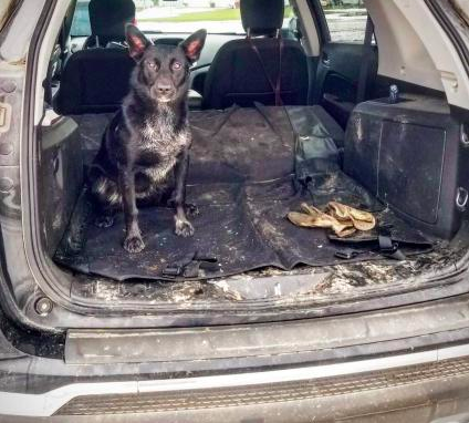 review's pic of muddy dog in the back of a car with the seat protector on the floor to keep away the mess