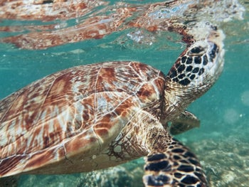 An image of a turtle taken underwater
