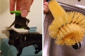 Hand holding plastic Tubshroom full of dog hair, plus a hand holding a weird-looking scrubbing brush