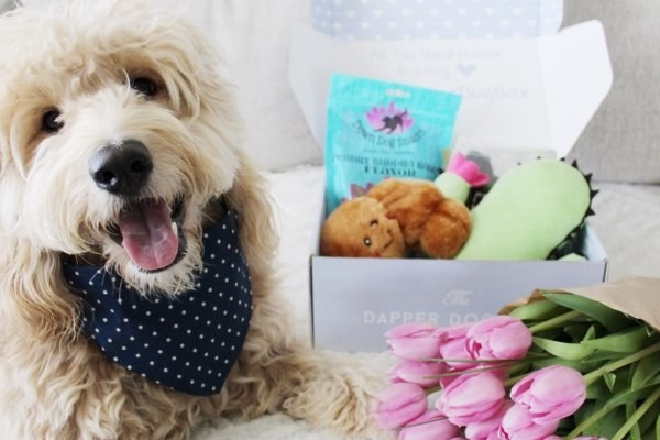 A fluffy dog wearing a bandanna and sitting next to goodies from the box, such as a chewy toy and treats