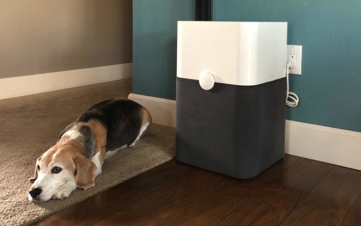 Beagle lying next to a black and white air purifier