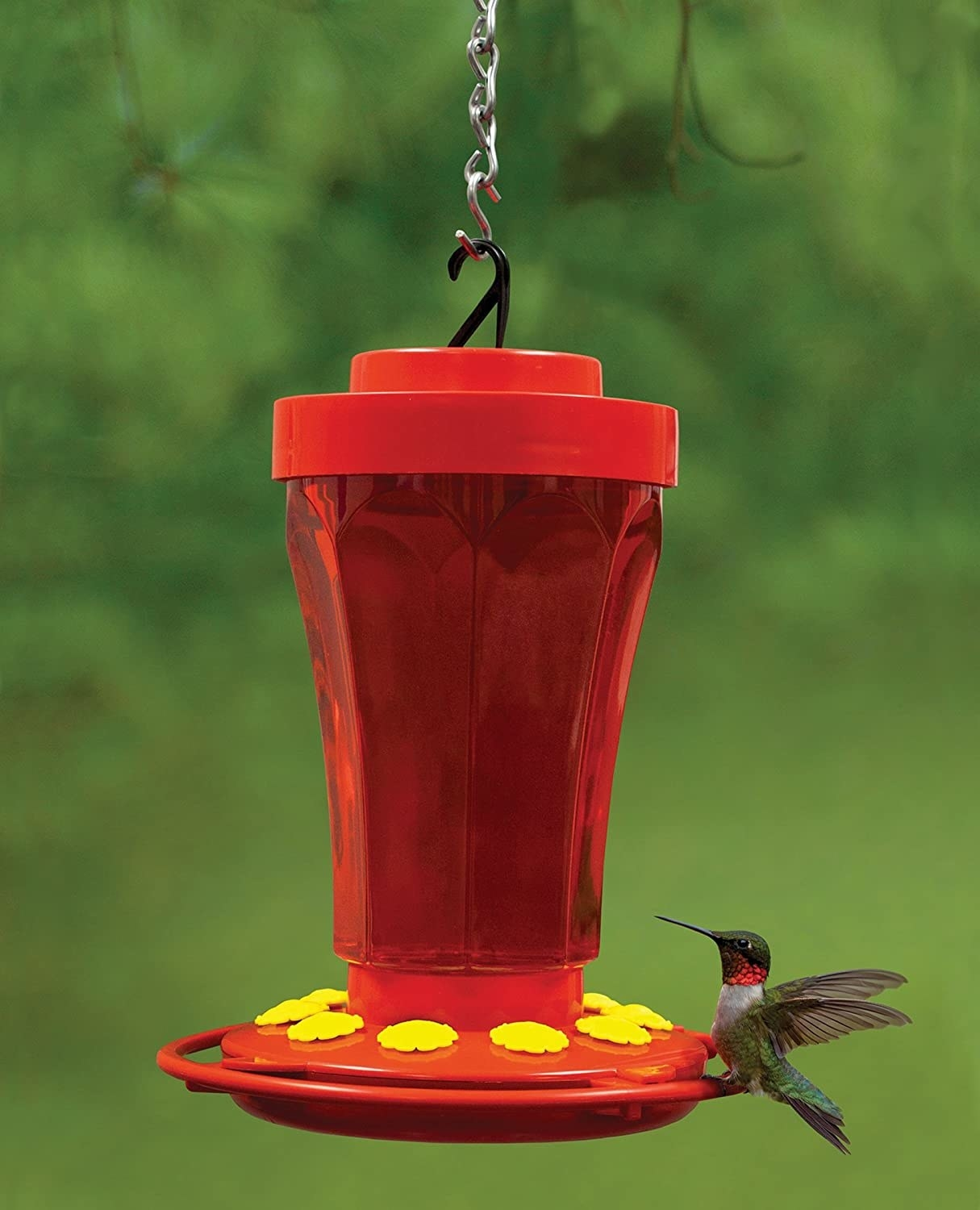 A hummingbird perches on a feeder