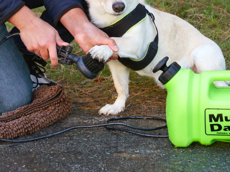person using the pressure washer to wash off a dog's paw on a sidewalk or driveway