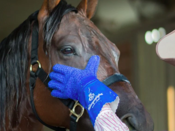 person wearing one of the gloves and cleaning a horse's face
