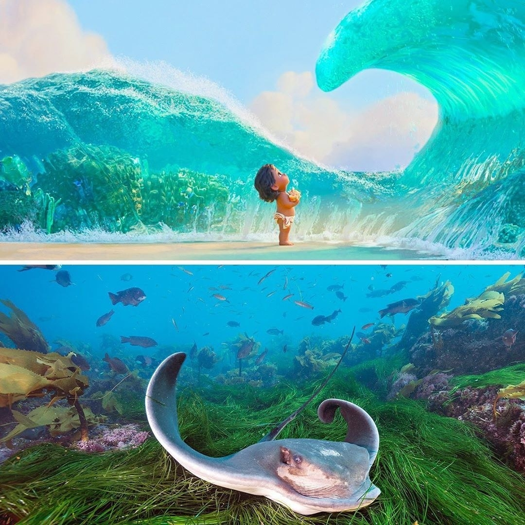 a split image with the top featuring a young moana in the ocean and the bottom featuring a real sting ray
