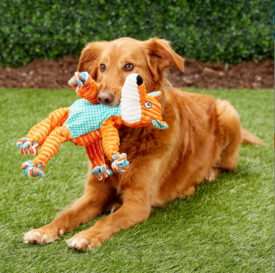 A Golden Retriver with the fox toy in their mouth