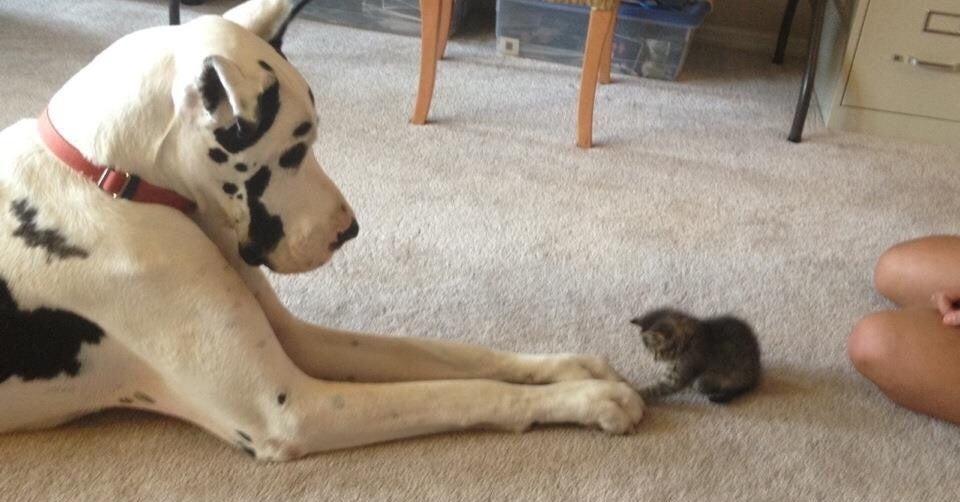 18 Freundschaften zwischen Hund und Katze, die dir 'nen beschissenen Tag verschönern