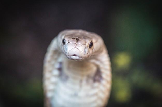 buzzfeed.com - [{'@type':'Person','name':'amrscu','url':'https://www.buzzfeed.com/amrscu','jobTitle':'Community Con - Que animal exótico traficado pro DF é você?