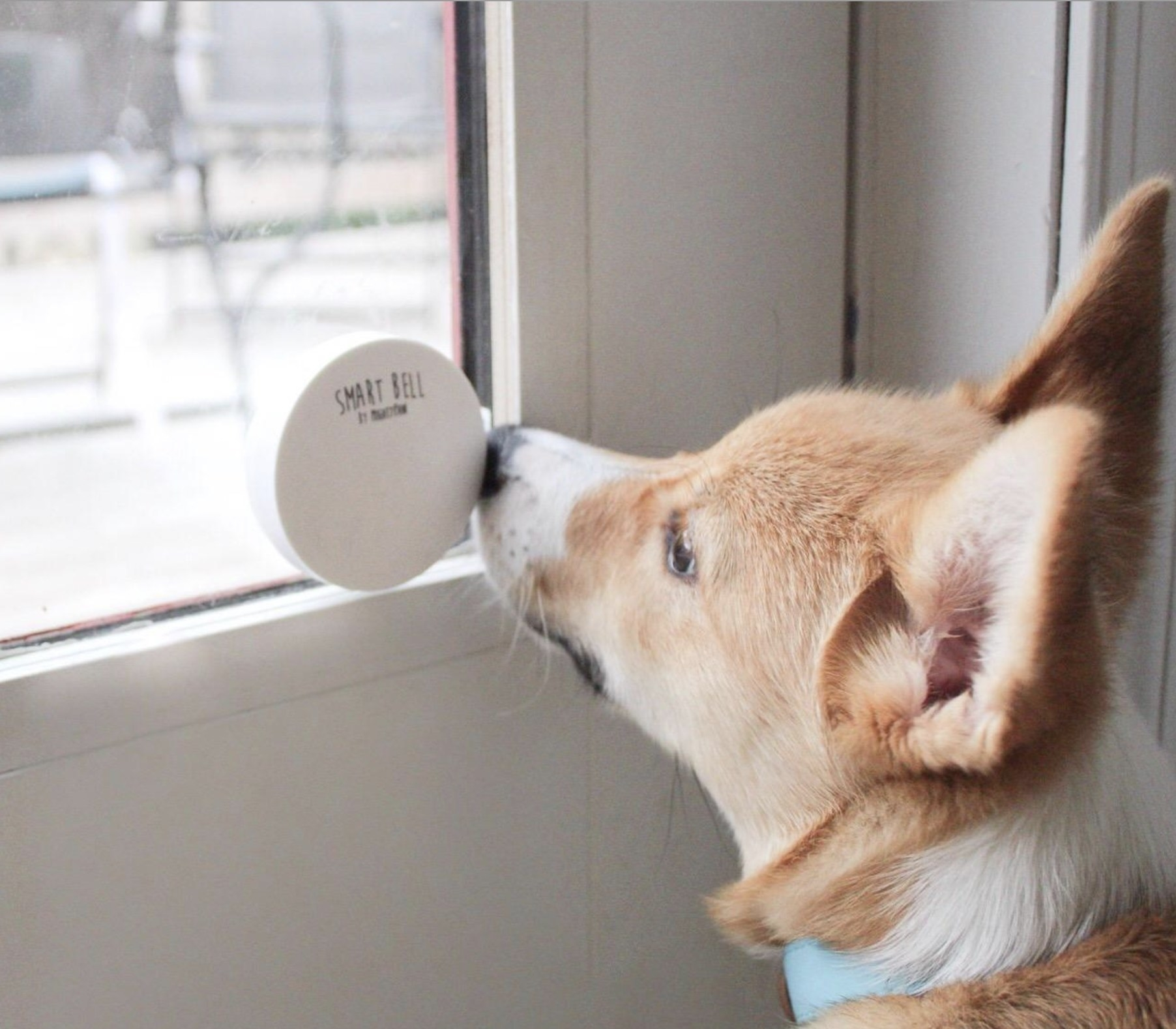 A reviewer's dog tapping the doorbell with their nose