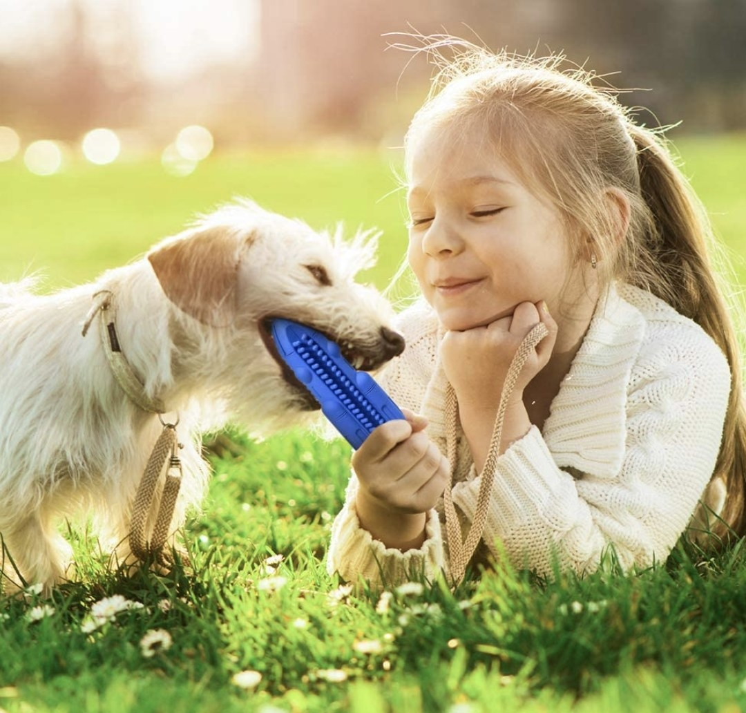 A dog and their owner playing with the squeaky toy