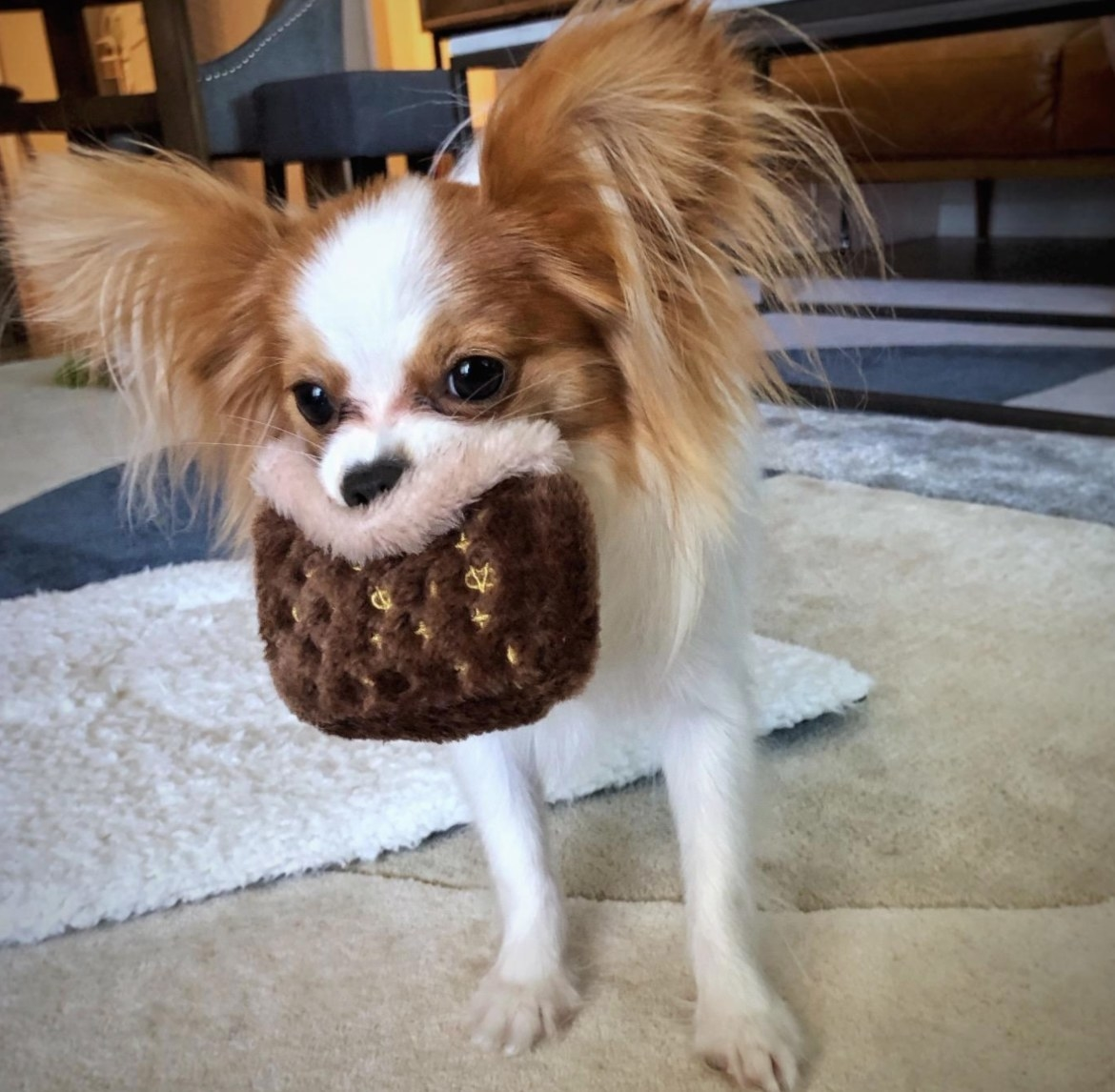 reviewer photo of a Papillon chewing on the chew toy
