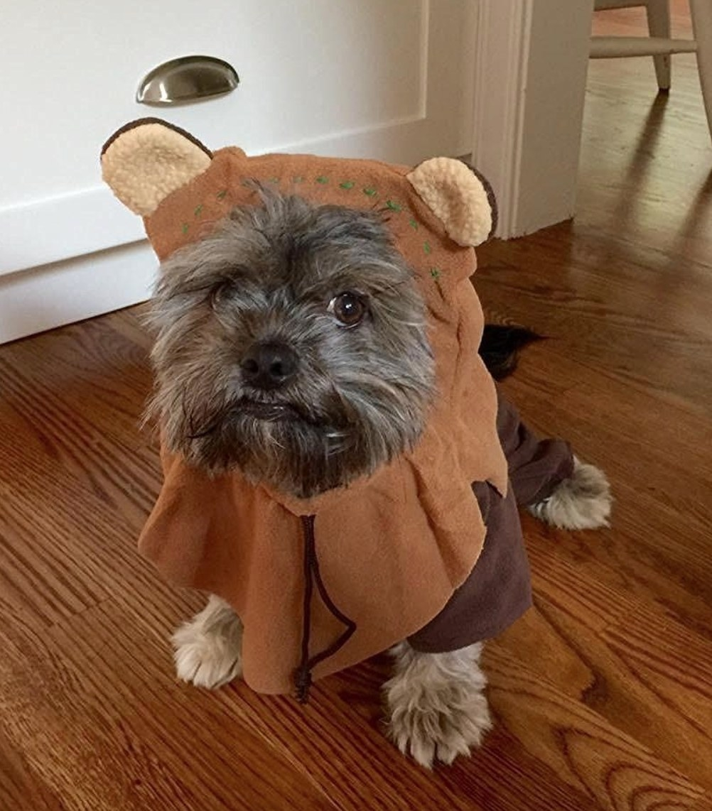 puppy wearing Ewok costume