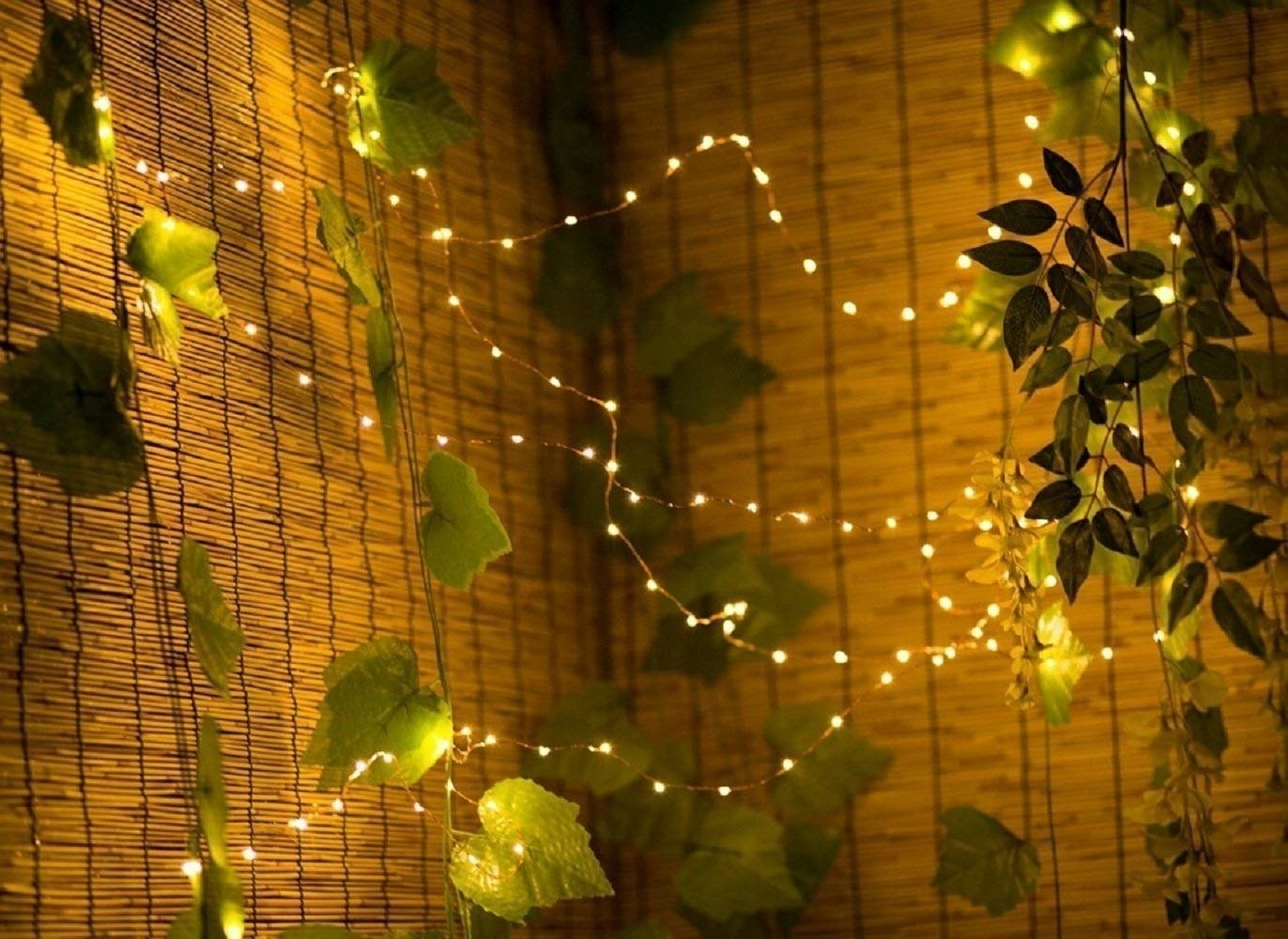 The string lights hung on plants