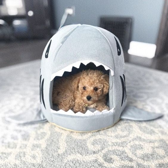 the gray shark bed with a toy poodle inside