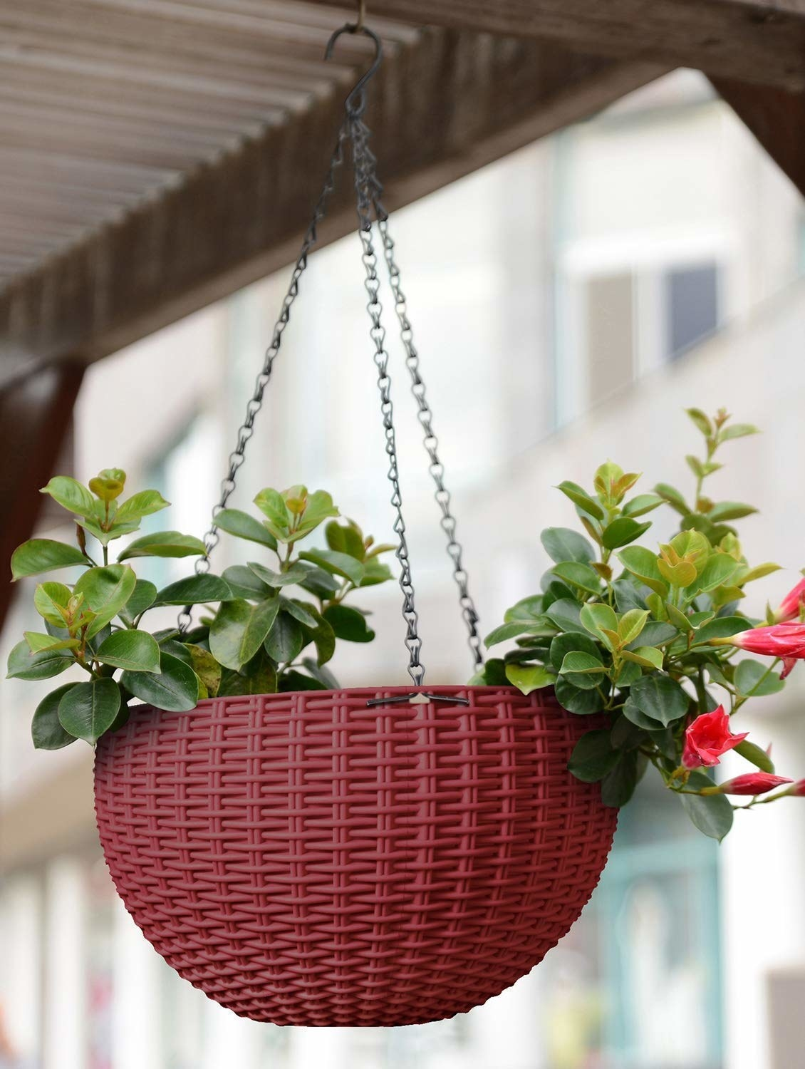 A maroon basket with plants in it